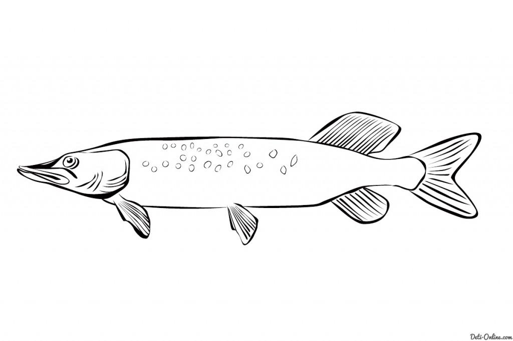 Раскраски рыба щука